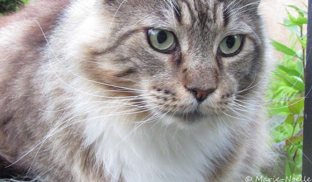 Photo in Random #chat #animal #cat