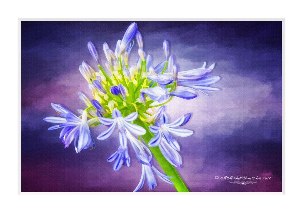 Photo in Fine Art #fine art #digital painting #flowers #macro #agapanthus