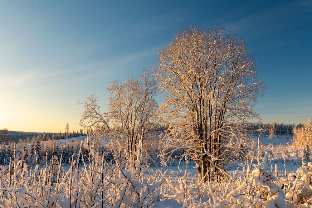 Photo in Nature #snow #winter #sunny #cold #tree #landscape