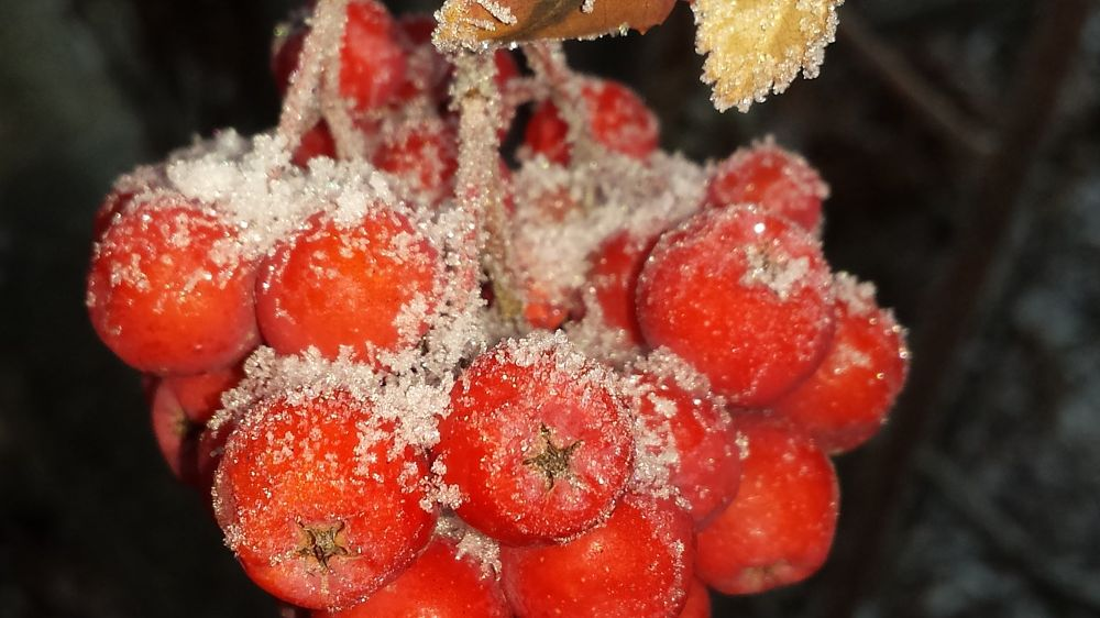 Photo in Nature #frost