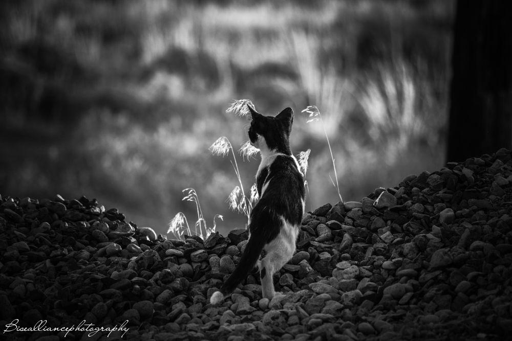 Photo in Animal #cat #kitten #b&w #black and white #rocks #weeds