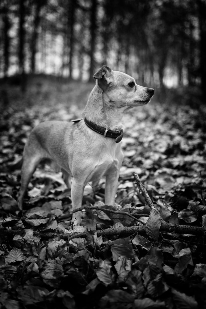Photo in Black and White #animal #dog #cañón #dogs #forest #bw #germany #animals #black and white #zeiss #zeiss distagon #canon 5d #canon 5d mkiii #thuringia