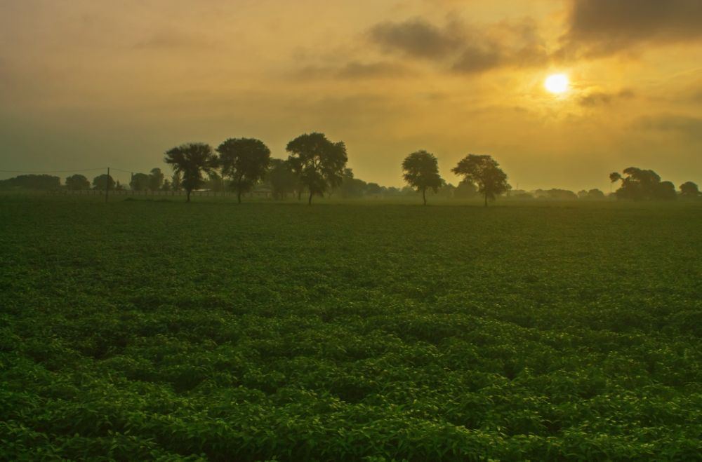 Photo in Nature #morning #sunrise #fields