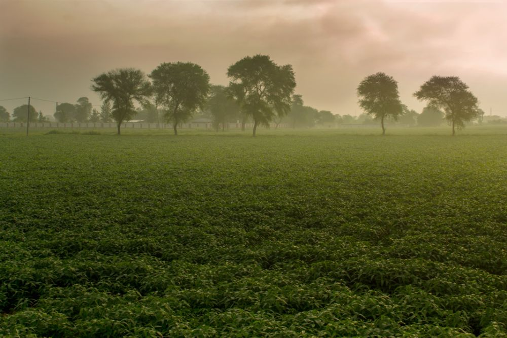 Photo in Nature #fields #mist #morning #clouds