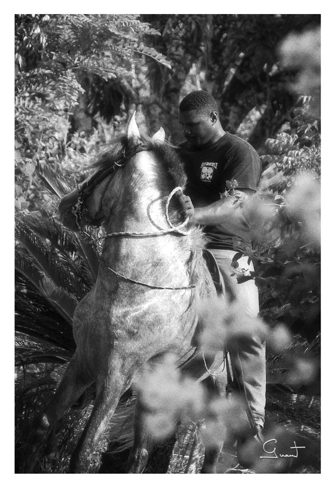 Photo in Black and White #horse #bw #blackandwhite #trainer