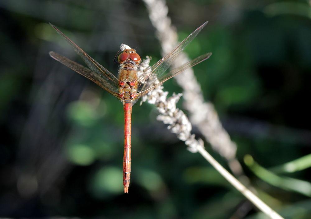 Photo in Macro #dragonfly #nature #macro