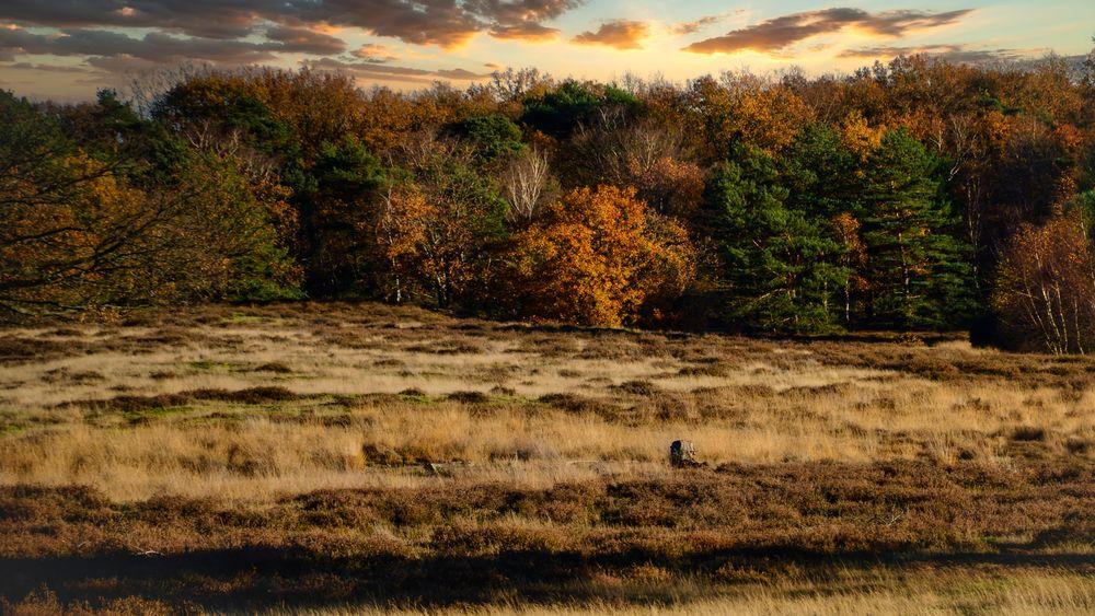 Photo in Landscape #sunset #autumn #fairytale #meadow #color #landscape