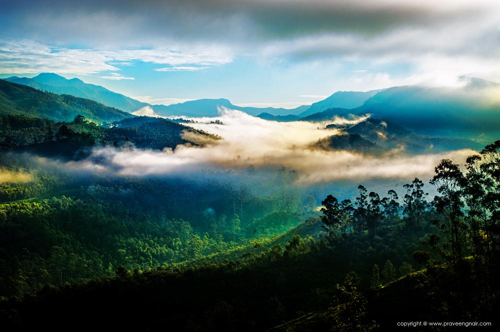 Photo in Landscape #nature #munnar #wildlife #www.praveengnair.com #www.ecows.in #green beauty