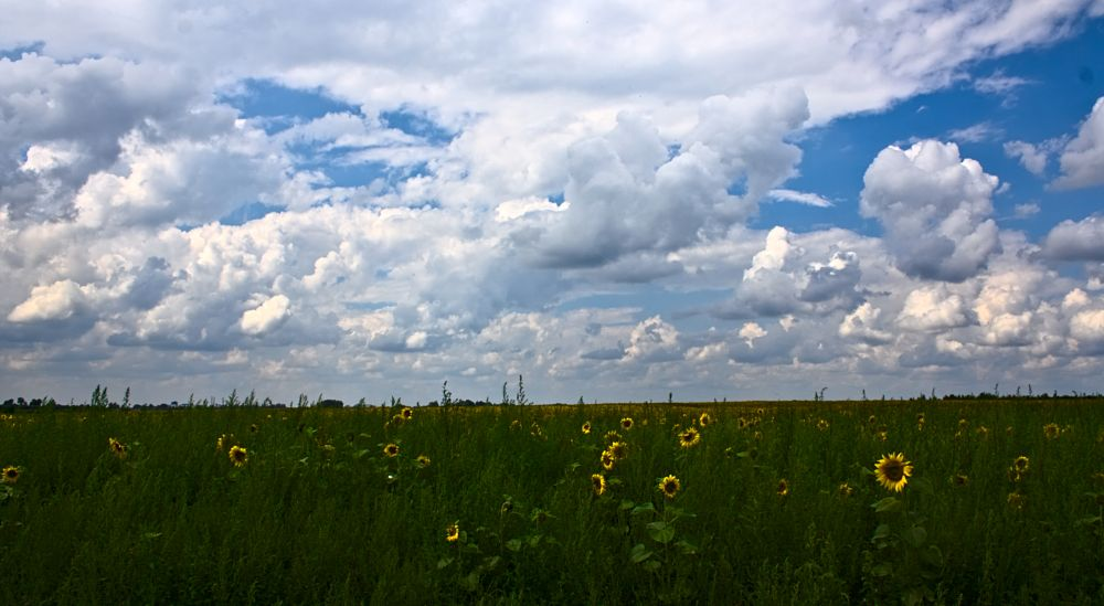 Photo in Rural #summer #rural #field #sunflower #sky #clouds #лето #поле #подсолнухи #небо #облака