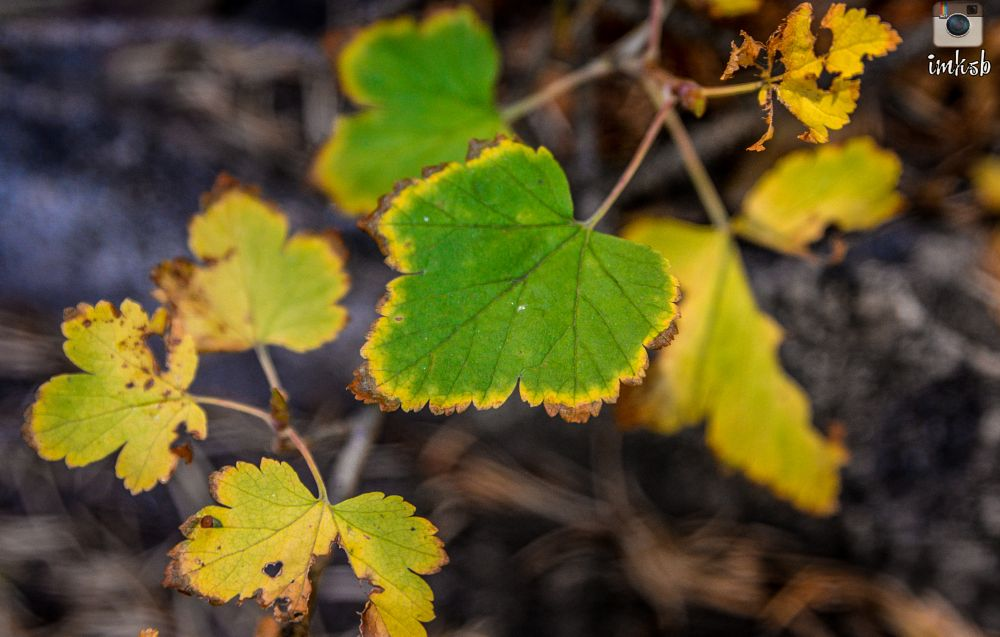 Photo in Nature #leaf #green #yellow #fall