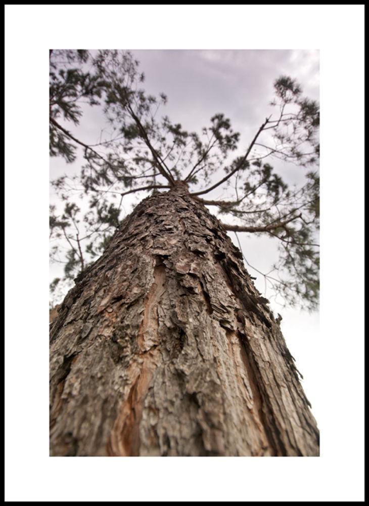 Photo in Nature #d300 #nikon #12-24 #alberi #natura
