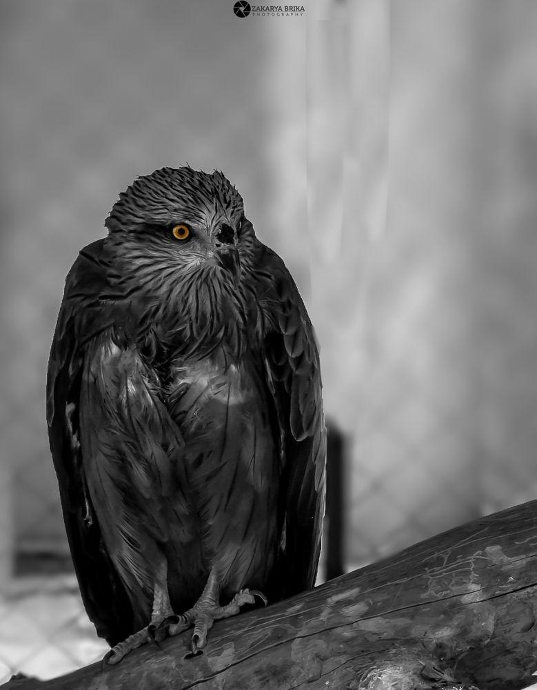 Photo in Random #eagle #animal #wildlife