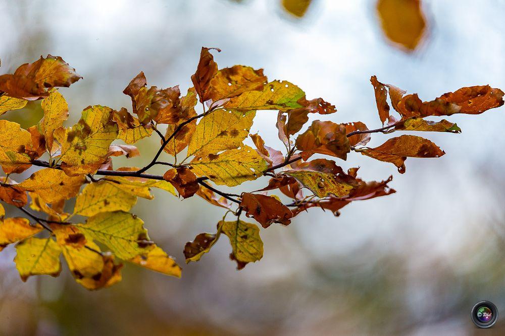 Photo in Nature #automne #coloré #colors