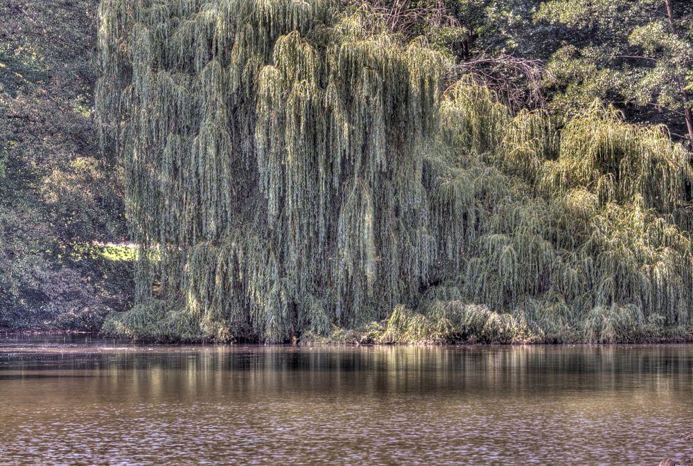 Photo in Nude #rosenau #rödental #roedental #coburg #germany #weeping willow