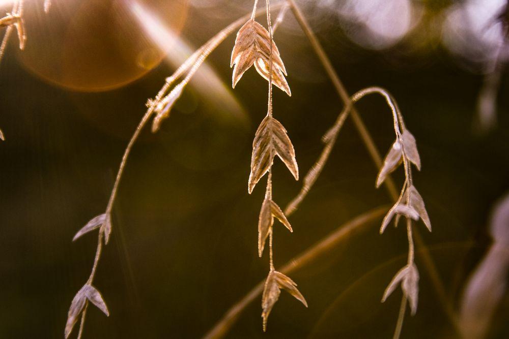 Photo in Nature #nature #sun flare #dusk #sun #close-up #beauty
