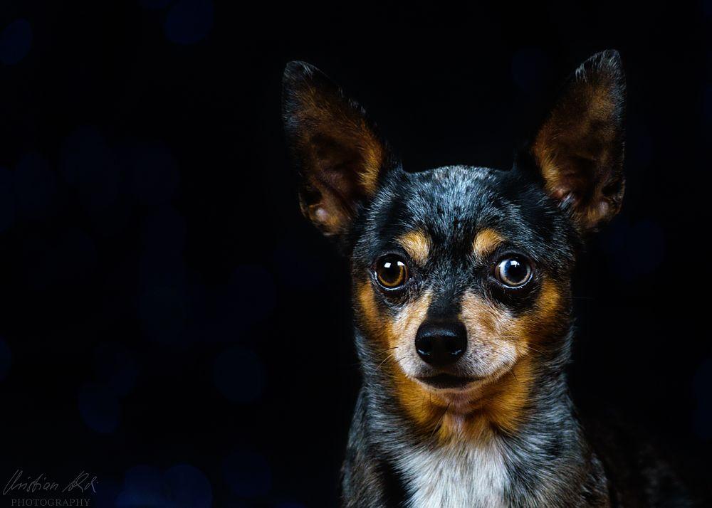 Photo in Animal #dog #pet #animal #sweet