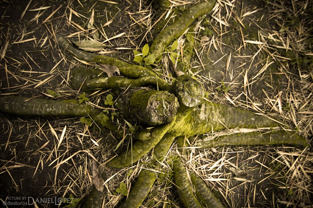 Photo in Nature #roots #green #land #nature #tree #bamboo #hug #verde #tierra #raices #abrazo