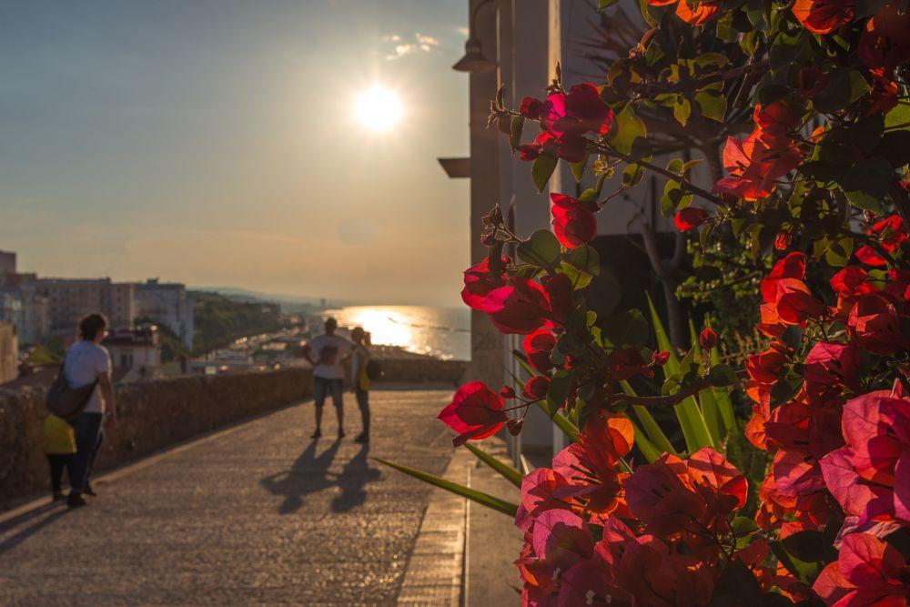 Photo in Random #termoli #molise #fiori #sea #sun #landscape #primavera #riflessi #ombre #italy #nikon