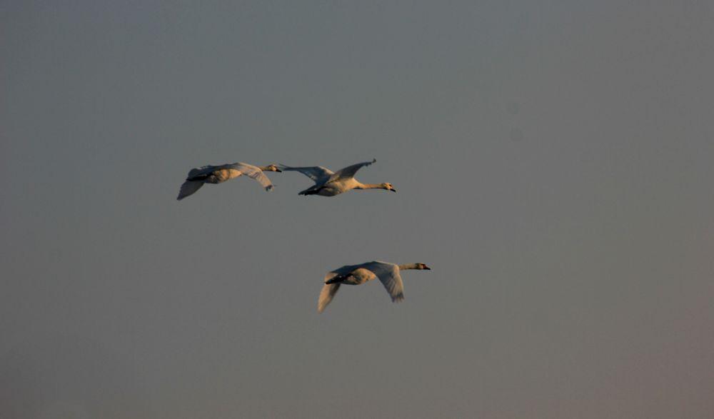 Photo in Random #heaven #sky #geese #birds #flying #fly #outside