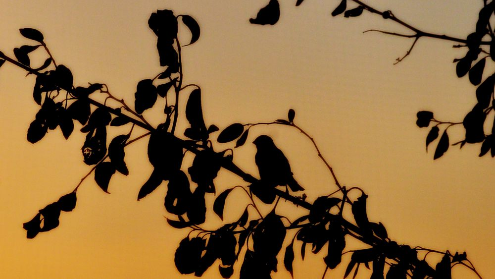 Photo in Nature #abstract #silhouette #golden #golden_hour #bird #tree #yellow #sunset #nature #window #nikon #nikontop #nikonartists #natgeo #attiaawadh #ibnatoota #attia_photography