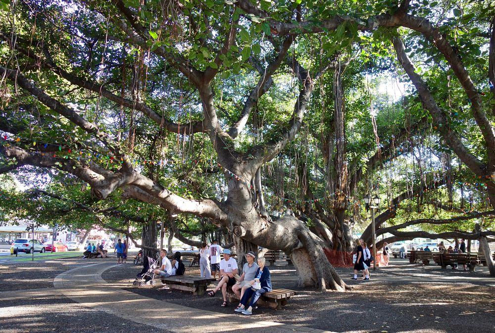 Photo in Random #gigantic  banyan tree  people