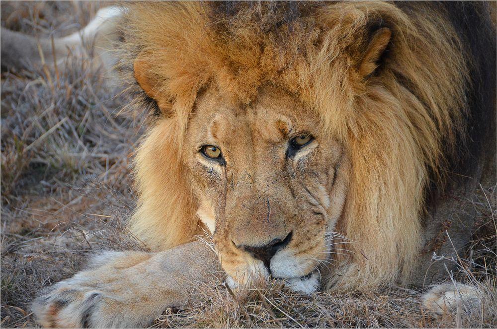 Photo in Animal #animal #eyes #rest #emotion
