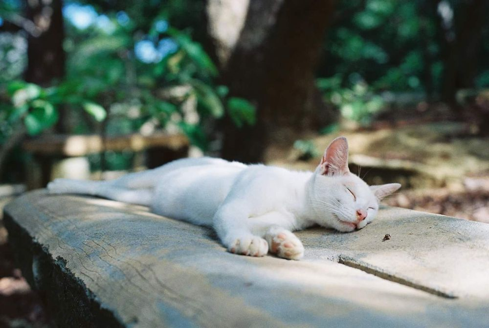 Photo in Random #olympus #film #filmcamera #cat #cute #animal #portrait #snapshot #park #japan