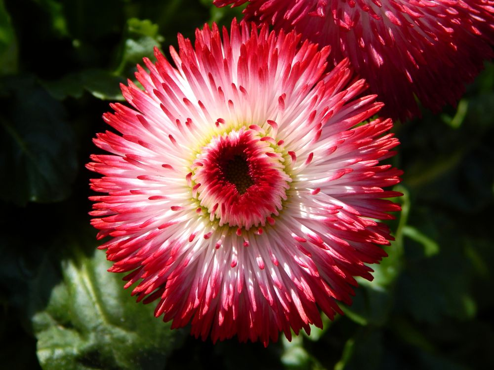 Photo in Nature #blossom #flower #spring #sunshine #beautiful