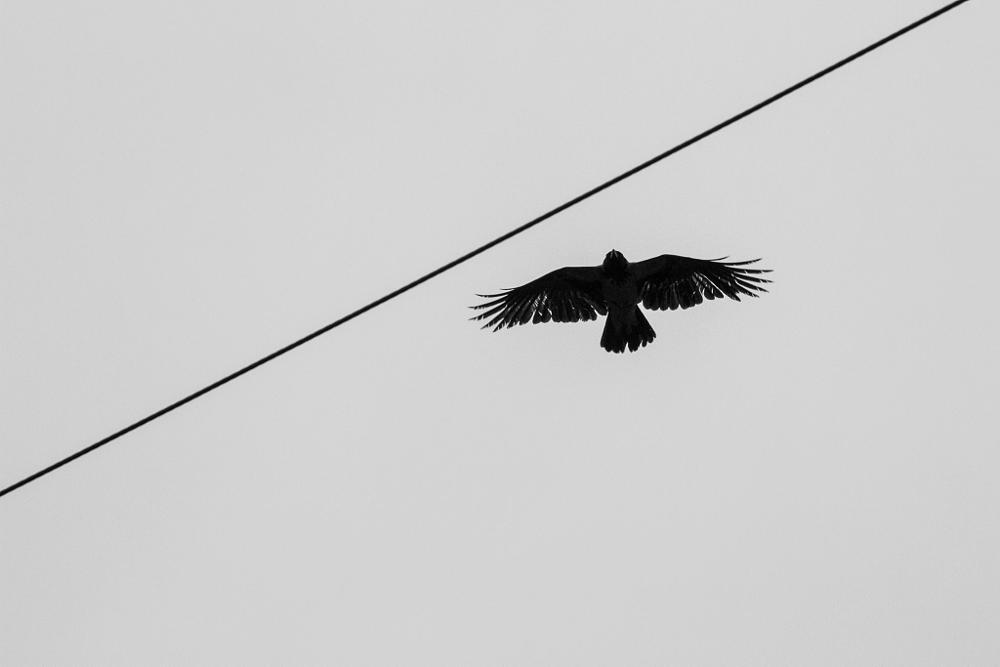 Photo in Black and White #black&whitebird
