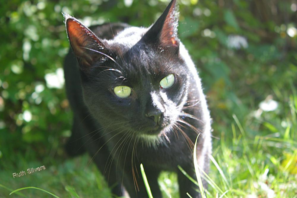 Photo in Animal #sugar #sun #shine #cat #pet #love #animal