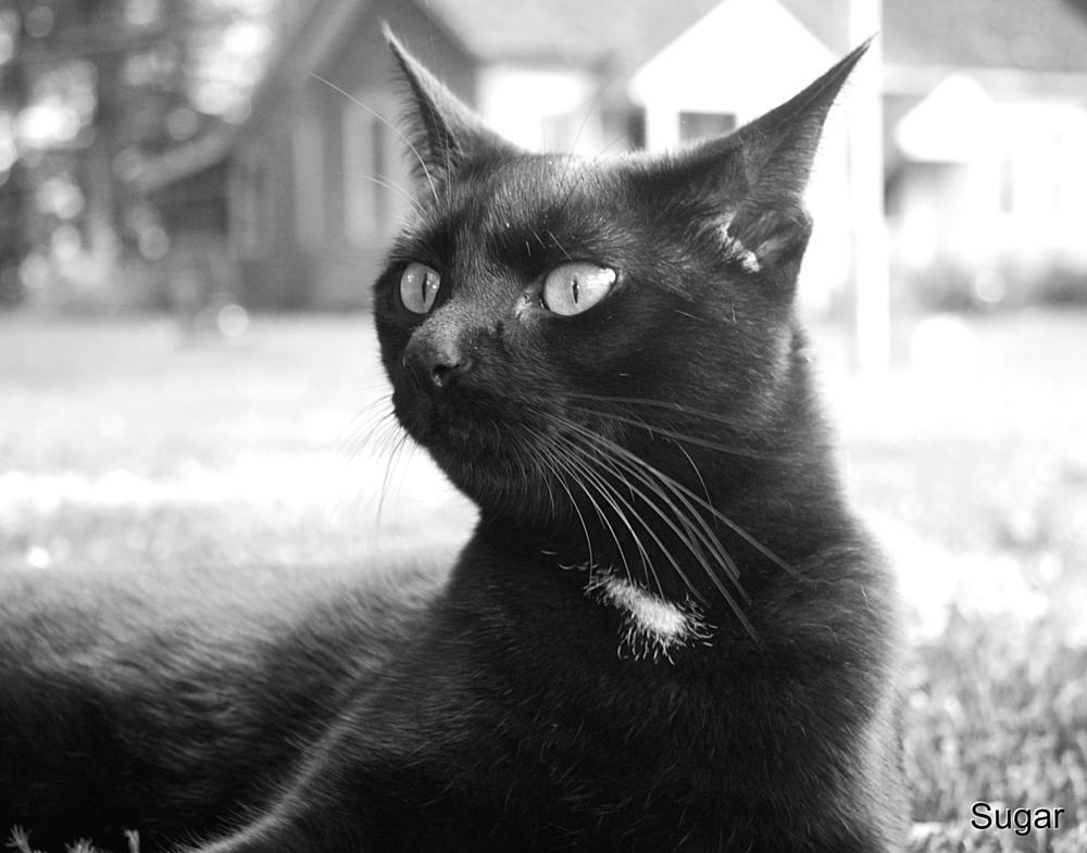 Photo in Animal #animal #pet #cat #black and white #love #sweet