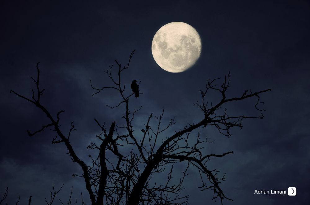 Photo in Fine Art #beautiful #moon #bird #night