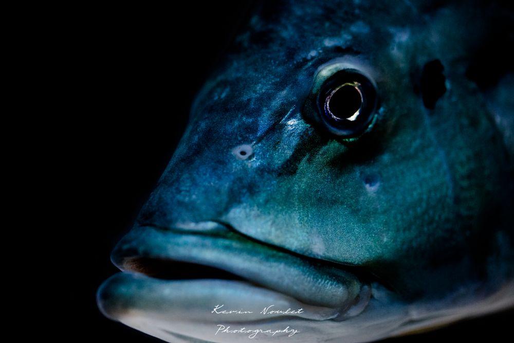 Photo in Macro #canon #canon5d #canon5dmarkiv #mark #iv #5d #fish #fishing #macro #pic #picture #zoo #aquarium #blue #closeup #picoftheday #pictures #bigfish #close #lightroom #photoshop #apple #imac #imacpro #nature #iso
