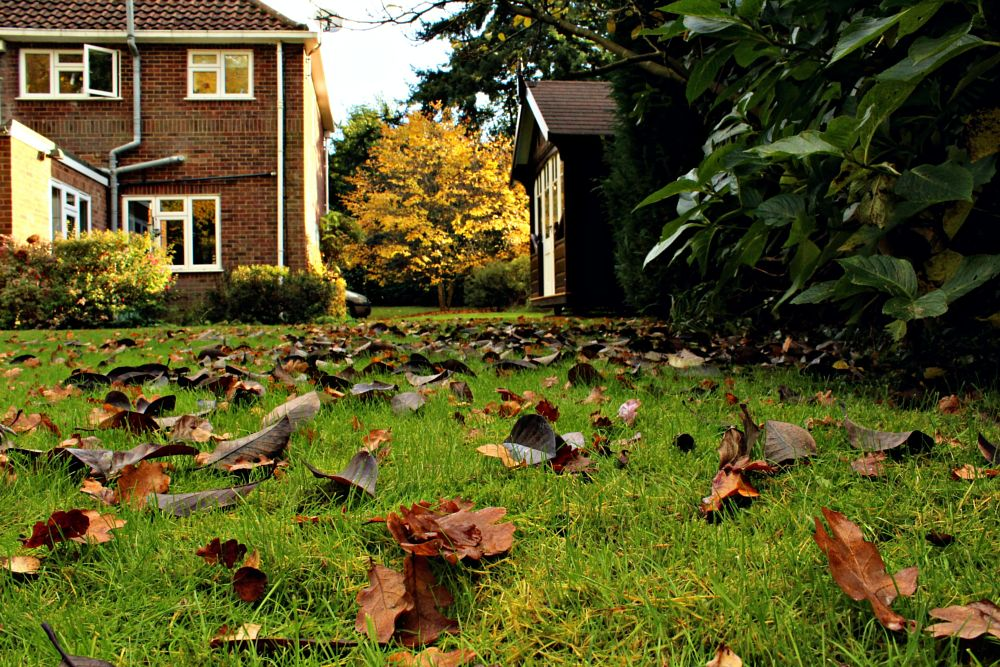 Photo in Nature #leaves #house #colour #autumn #season #nature