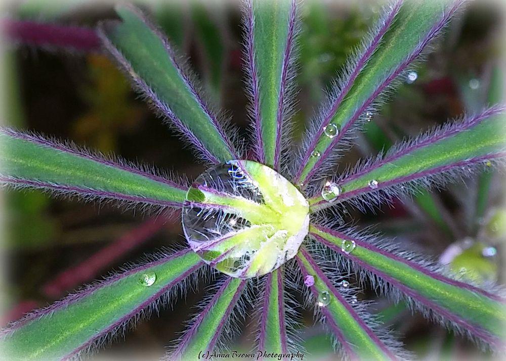 Photo in Macro #rain #nature #plants