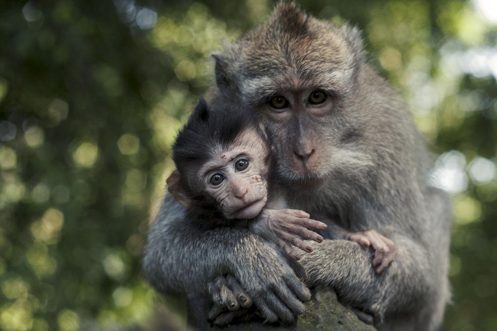 Photo in Portrait #family #bali #baby #green #monkey #sad #portrait #mother #asia #fur