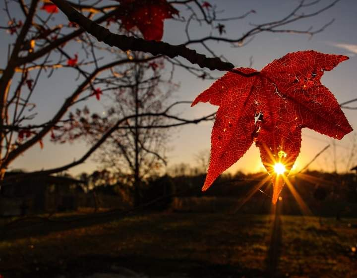 Photo in Nature #leaf #trees #nature #fall #weather #sunset