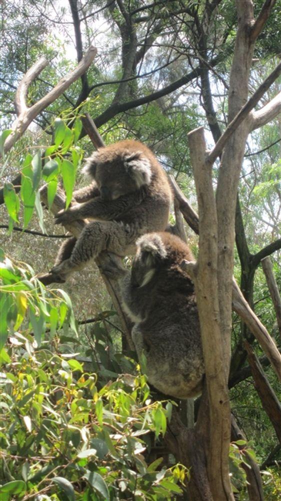 Photo in Random #australia