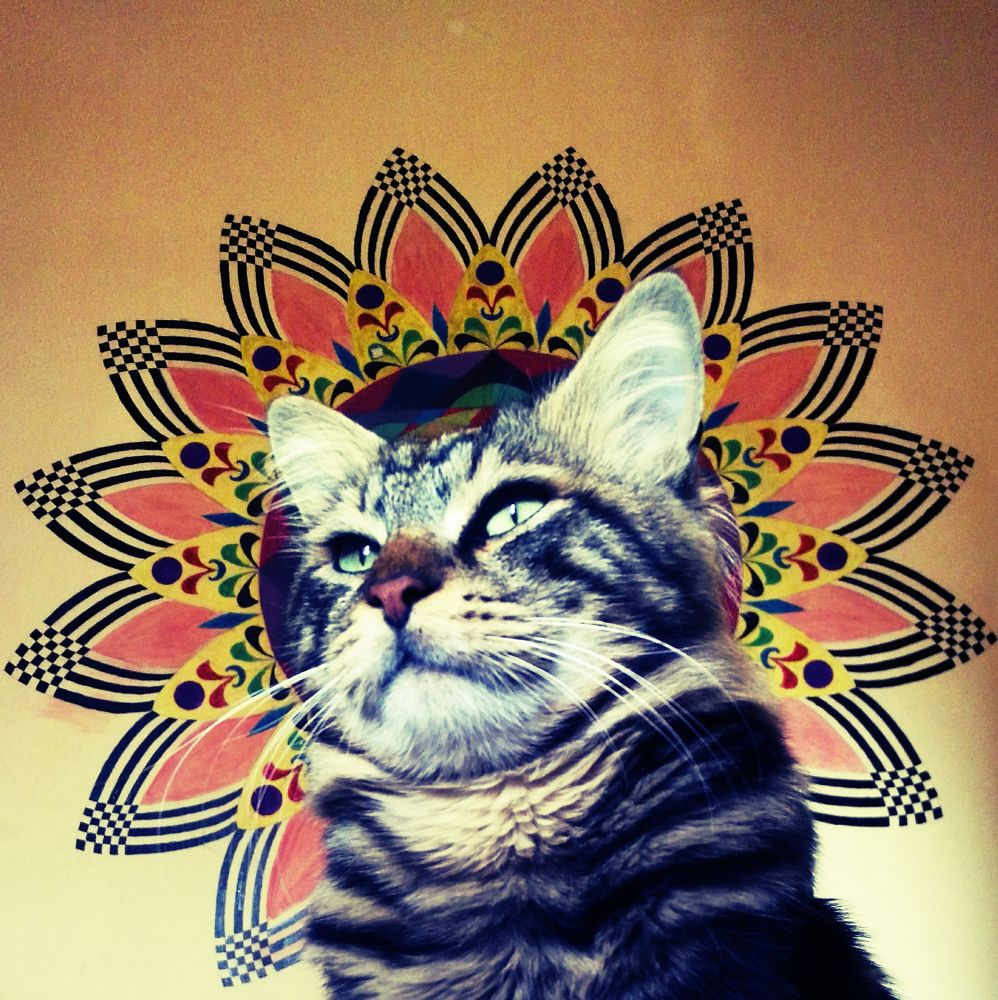 Photo in Animal #mandala #cat