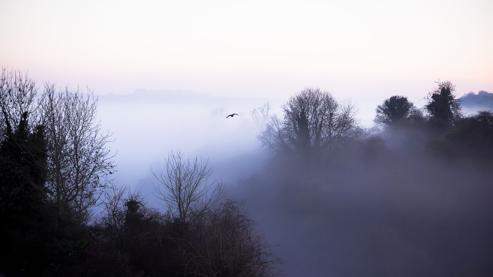 Photo in Landscape #valley #mist #morning #flying #trees #soft #jackdaw #bird #fog #mysterious