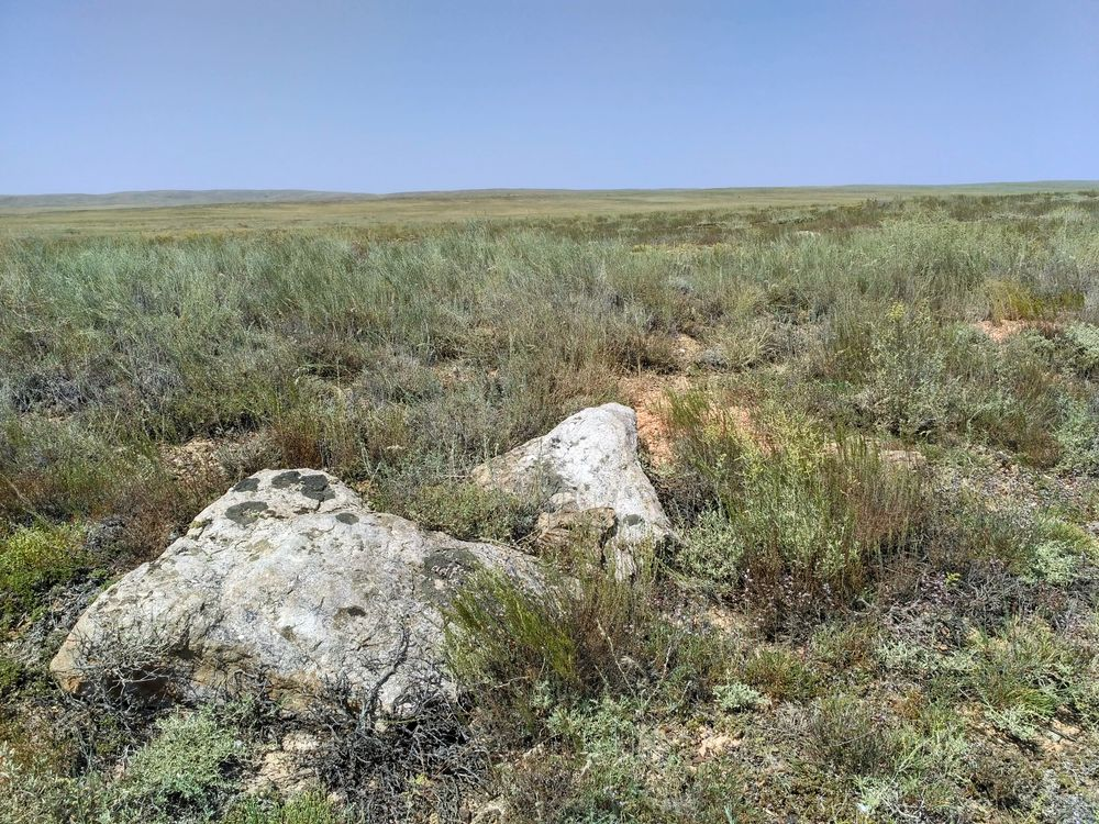 Great steppe 2