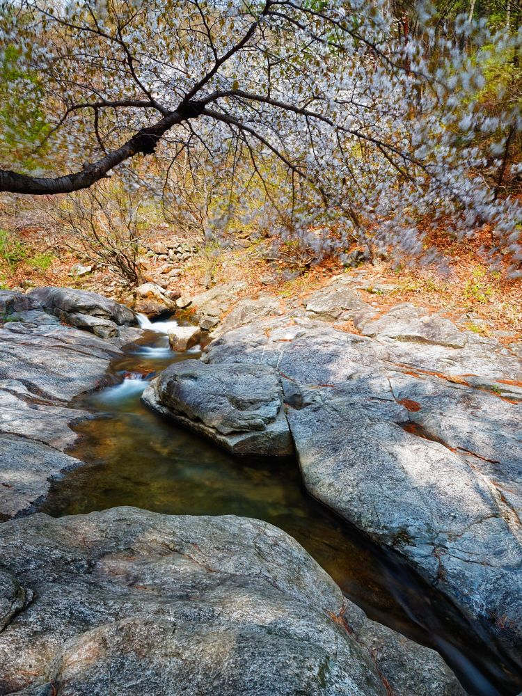 Photo in Nature #stream #creek #blossoms #spring #forest #rocks