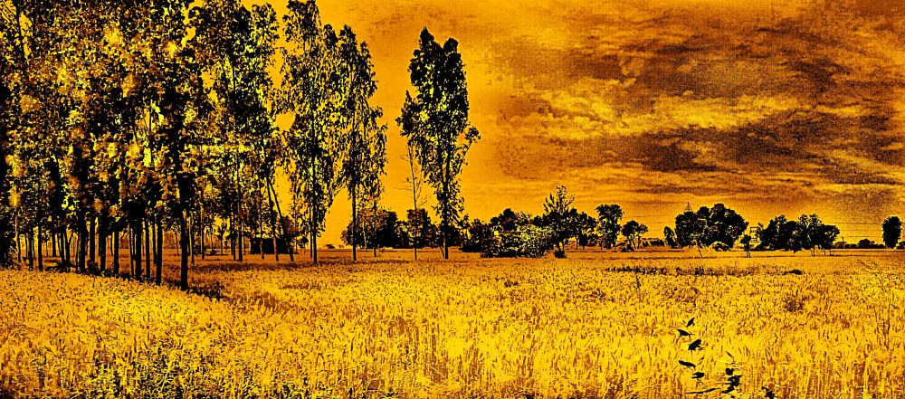 Photo in Landscape #evening #clouds #farmland #trees