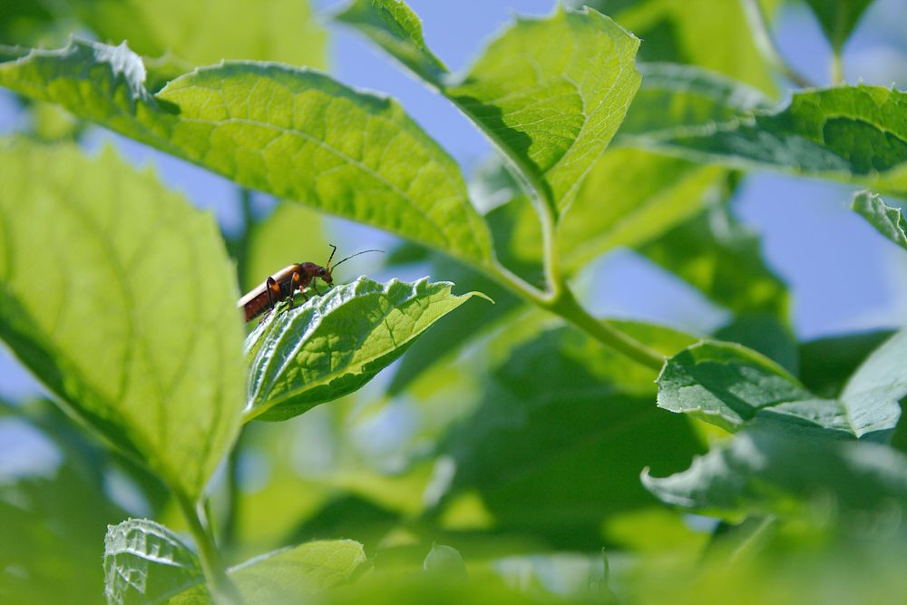 Photo in Nature #insect #leaf #nature #close up