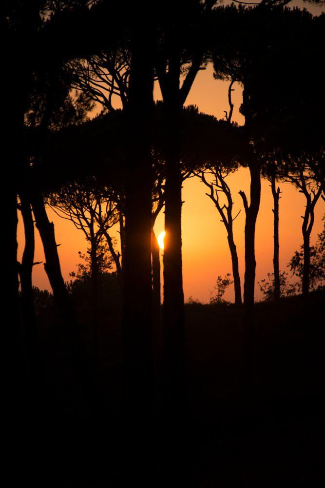 Photo in Nature #dusk #sunset #trees #sun #nikon d7200