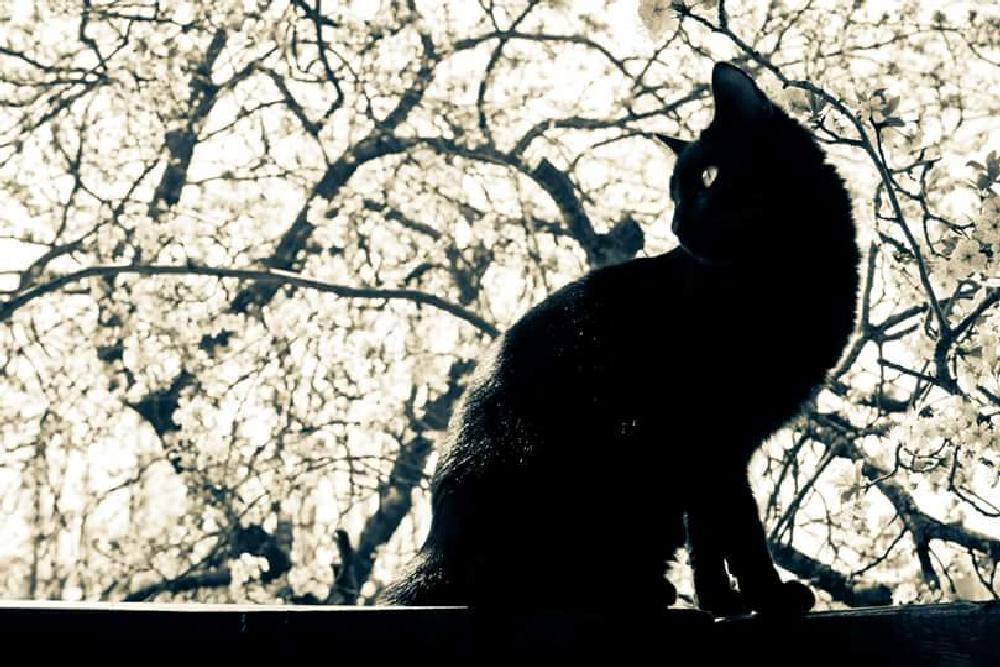 Photo in Animal #cat #black #animal