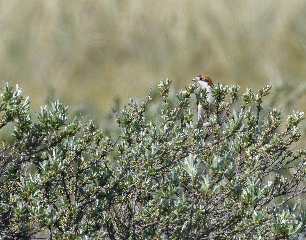 Photo in Nature #bird