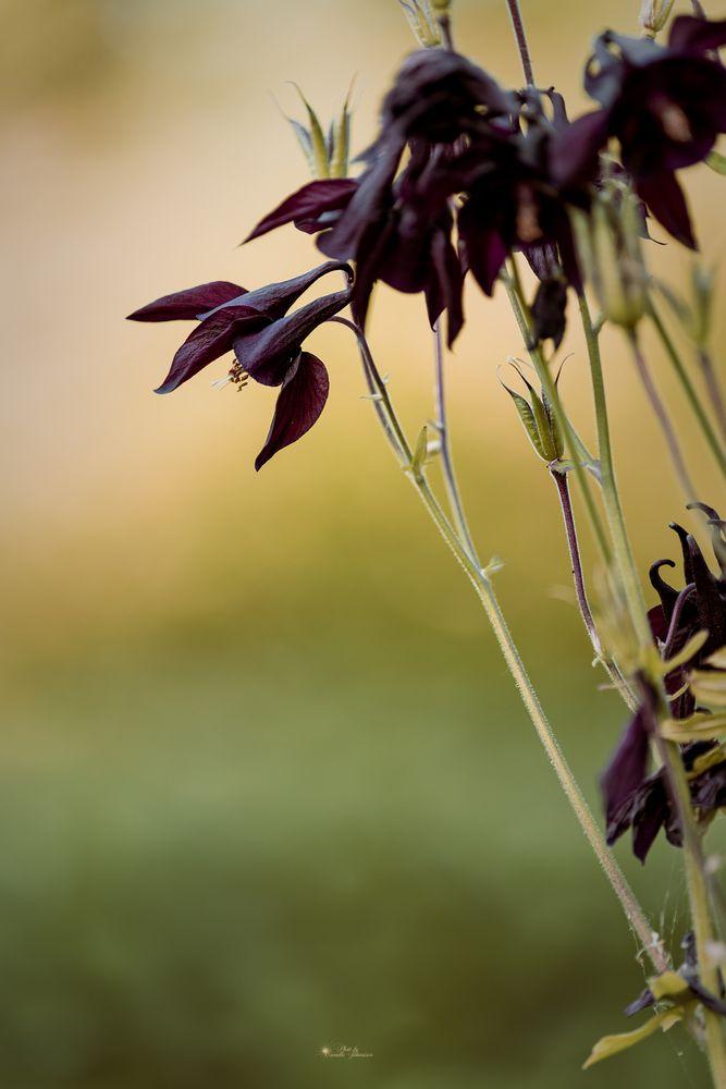 Photo in Random #flower #macro #nature #photoby_camillajohansson