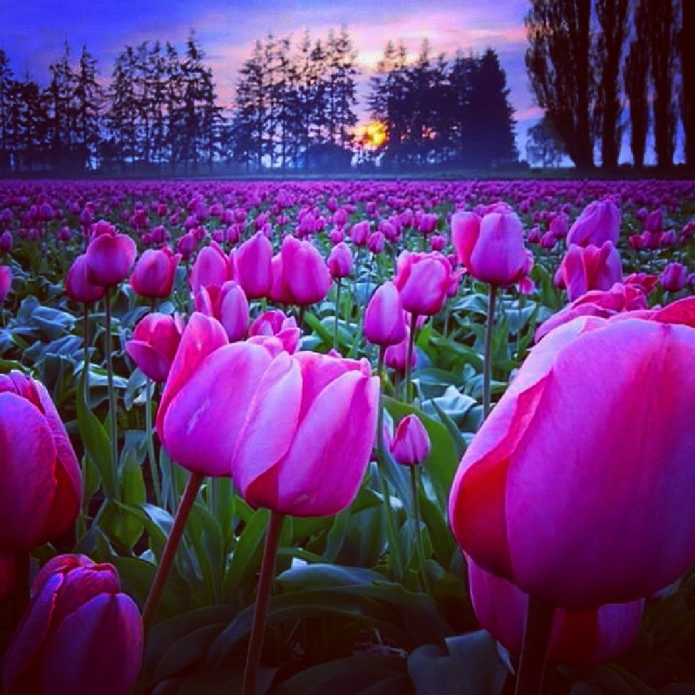 Photo in Nature #pleasefollowme #likeforlike #photooftheday