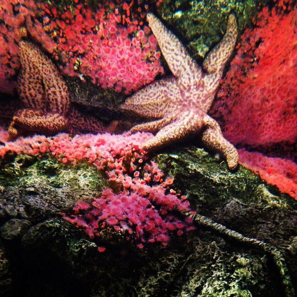 Photo in Still Life #starfish at shark reef aquariu